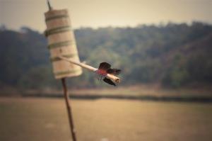 Photo by Seema Krishnakumar.