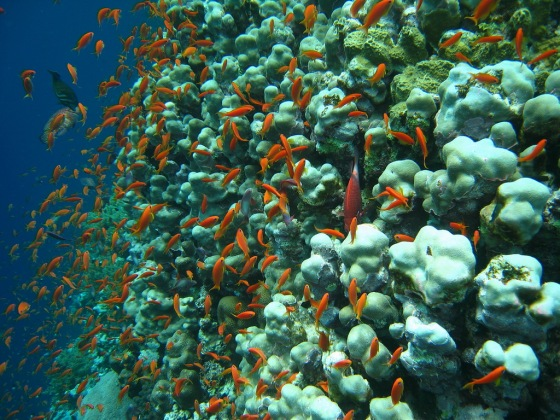 Marsa Alam under sea. Photo by Bruno Delzant.